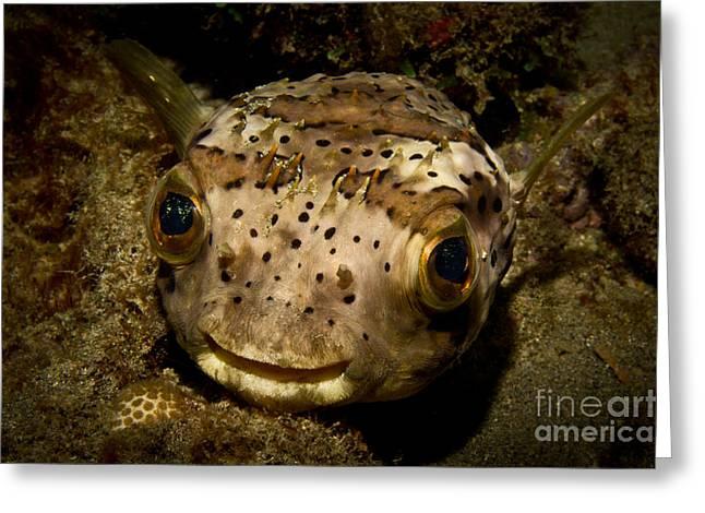 Happy Fish Greeting Card by Craig Dietrich