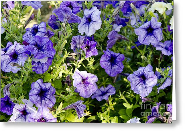 Greeting Card featuring the photograph Happy Flowers by Wilma  Birdwell
