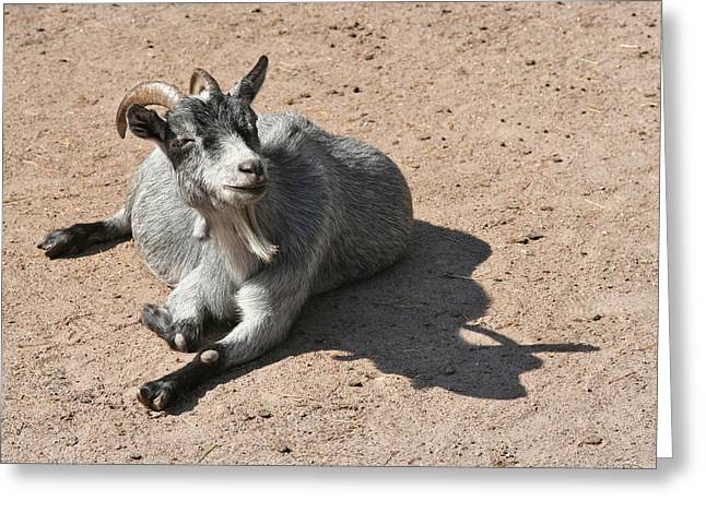 Happy Goat Greeting Card