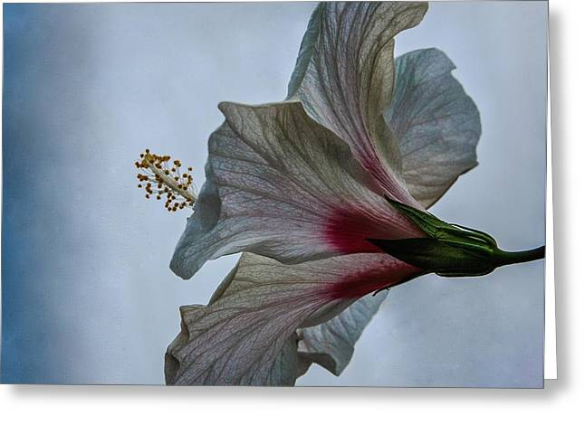 Happy Hibiscus At Biltmore Conservatory Greeting Card by Lori Miller