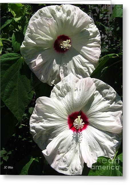Happy Hibiscus Greeting Card