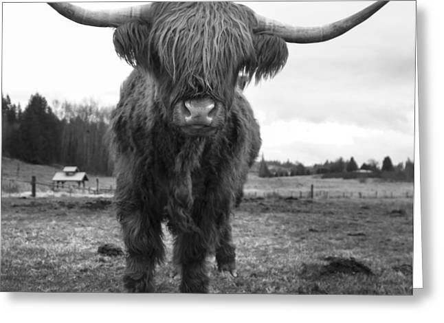 Happy Highland Cow Greeting Card by Sonya Lang