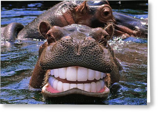 Happy Hippo Greeting Card