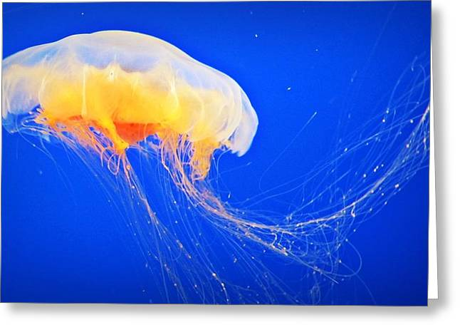 Happy Jelly  Greeting Card by Lynsie Petig