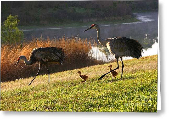 Happy Sandhill Crane Family Greeting Card by Carol Groenen