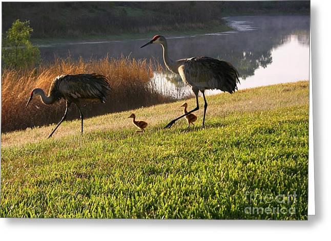 Happy Sandhill Crane Family - Original Greeting Card by Carol Groenen