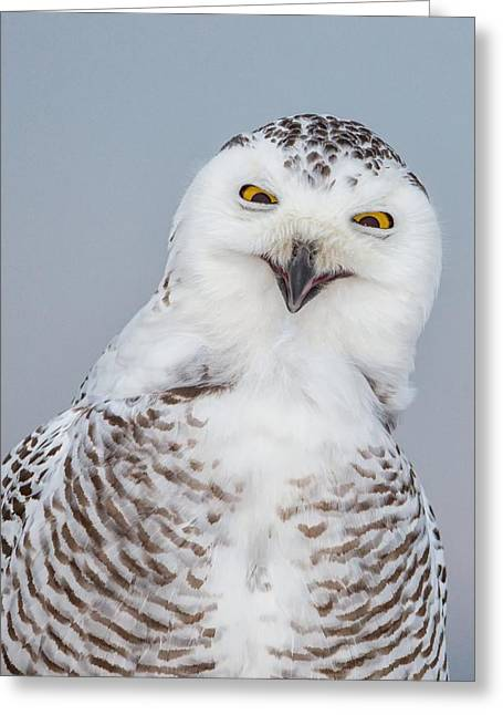 Happy Snowy Owl Greeting Card