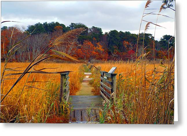 Happy Trails Greeting Card by Dianne Cowen