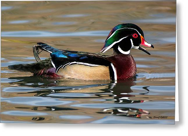 Happy Wood Duck  Greeting Card by Stephen  Johnson