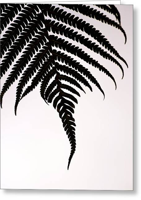 Hapu'u Frond Leaf Silhouette Greeting Card