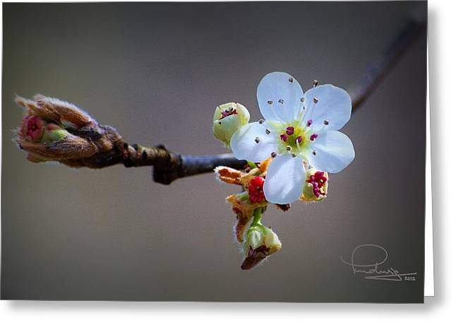 Greeting Card featuring the photograph Harbinger Of Spring by Ludwig Keck