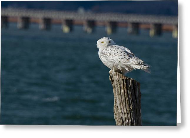 Harbor Sentry Greeting Card