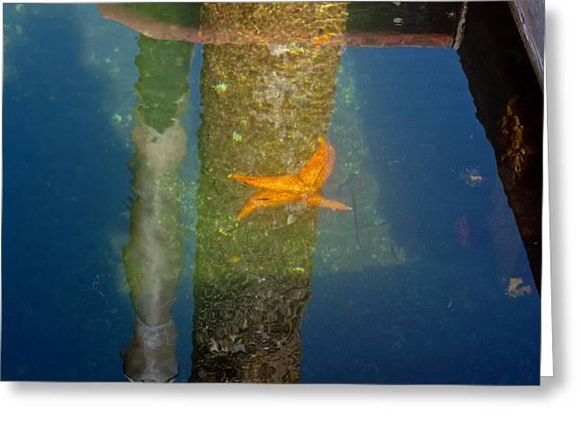 Harbor Star Fish Greeting Card