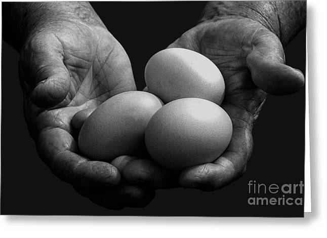 Hard-working Hands Gathering Eggs Greeting Card