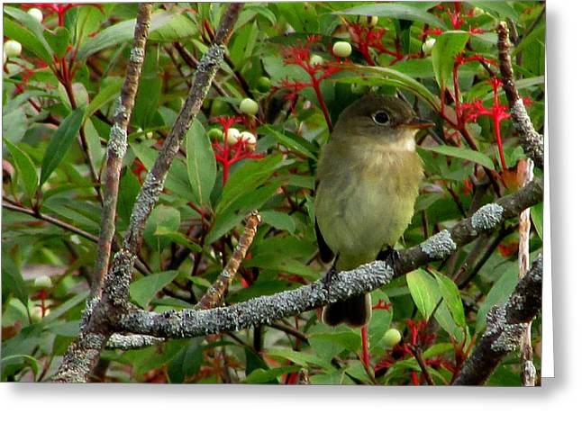 Greeting Card featuring the photograph Hardly The Least Least Flycatcher by Kimberly Mackowski