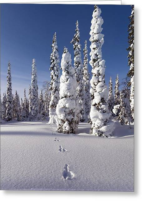 Hare Tracks In Deep Snow Greeting Card