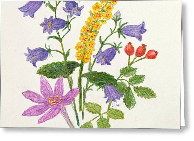 Harebells And Other Wild Flowers  Greeting Card by Ursula Hodgson