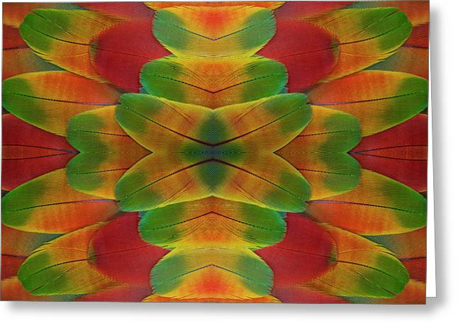 Harlequin Macaw Wing Feather Design Greeting Card by Darrell Gulin