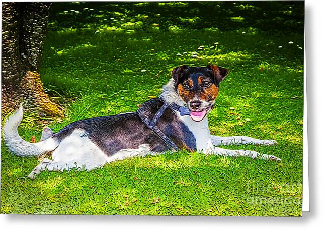 Harley Resting In Dappled Shade Greeting Card