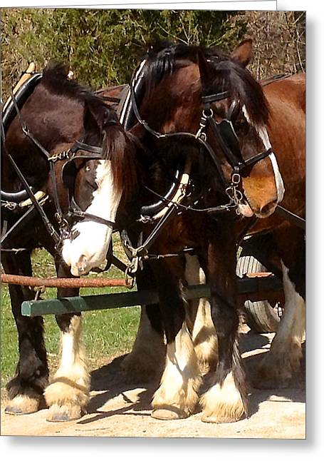 Harness Partners Greeting Card by Jeff Gater
