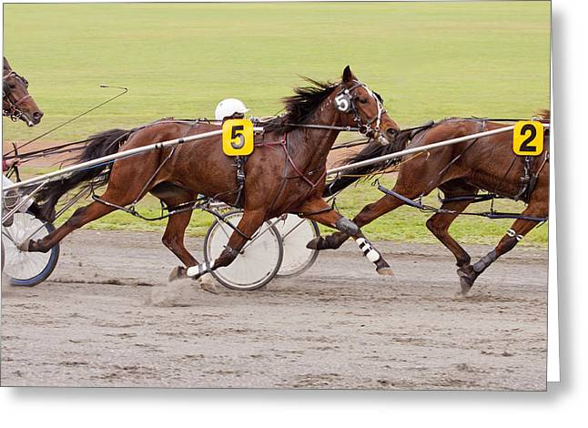 Harness Racing Greeting Card by Michelle Wrighton