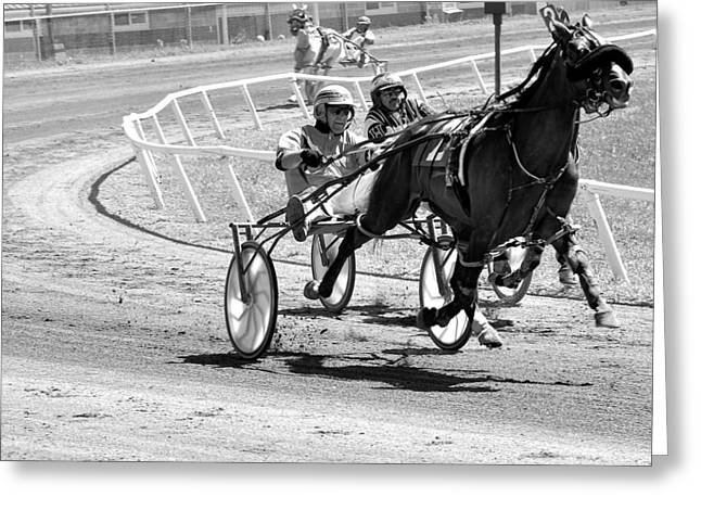 Harness Racing Greeting Card by Todd Hostetter