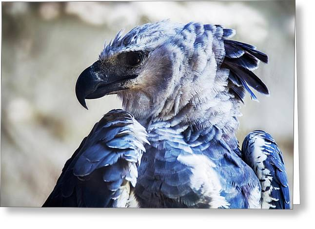 Harpy Eagle Harpia Harpyja Greeting Card by Leonardo Mer�on