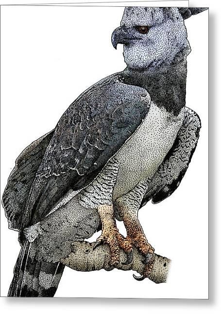 Harpy Eagle, Harpia Harpyja Greeting Card by Roger Hall