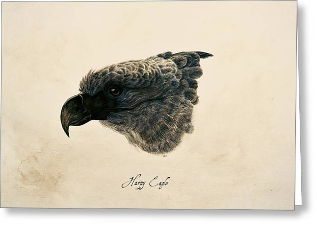 Harpy Eagle Greeting Card by Rachel Root