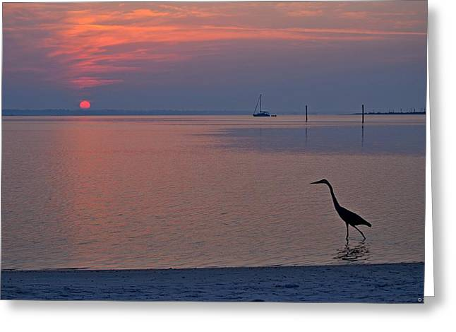 Greeting Card featuring the photograph Harry The Heron Fishing On Santa Rosa Sound At Sunrise by Jeff at JSJ Photography