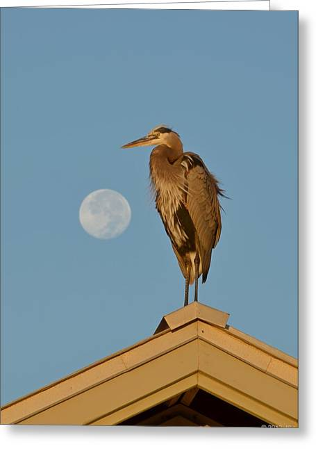 Greeting Card featuring the photograph Harry The Heron Ponders A Trip To The Full Moon by Jeff at JSJ Photography