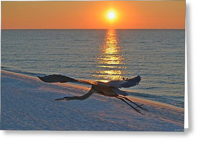 Greeting Card featuring the photograph Harry The Heron Takes Flight To Reposition His Guard Over Navarre Beach At Sunrise by Jeff at JSJ Photography
