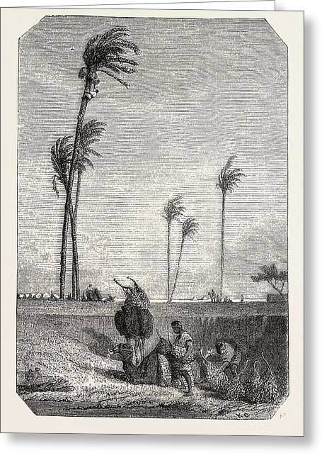 Harvest Dates In Egypt Greeting Card