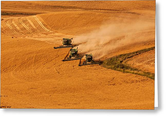 Harvest Greeting Card by Mary Jo Allen