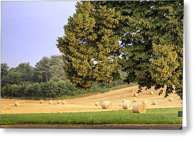 Harvest Morning Greeting Card by Georgia Fowler