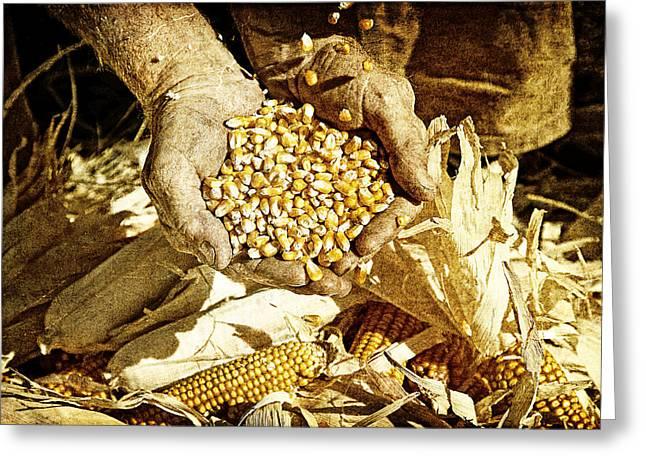 Harvest Of Plenty Greeting Card