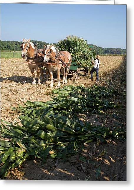 Harvest On An Amish Farm Greeting Card