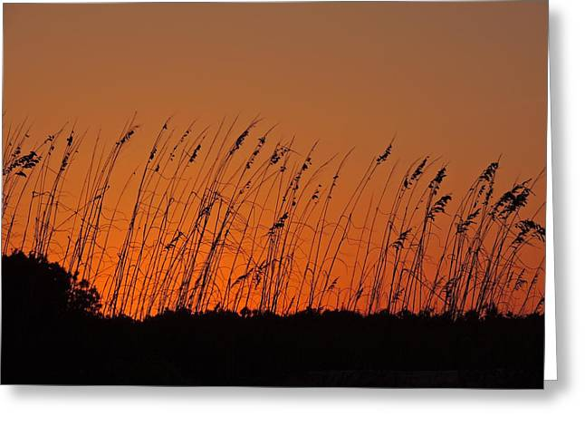 Harvest Sky And Sea Oats Greeting Card