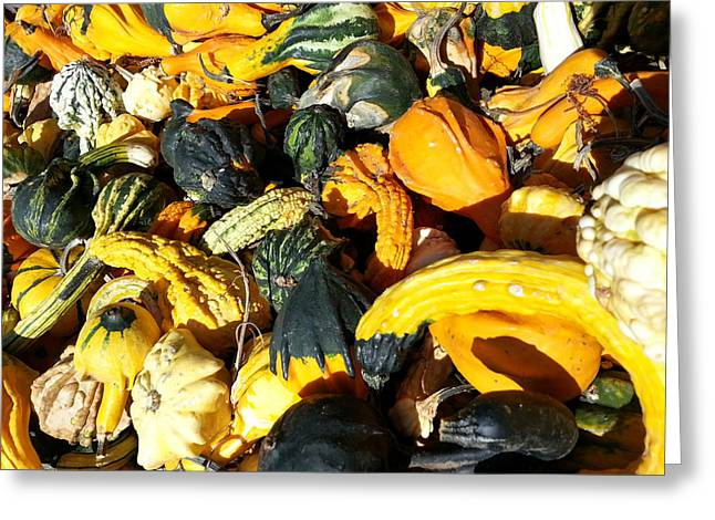 Greeting Card featuring the photograph Harvest Squash by Caryl J Bohn