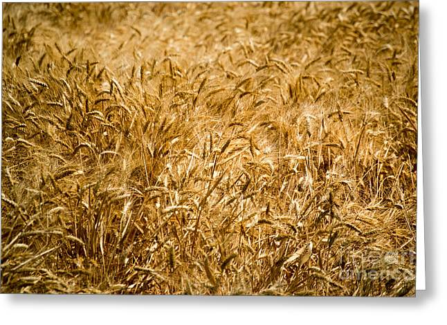 Harvest Time Greeting Card by Beverly Guilliams