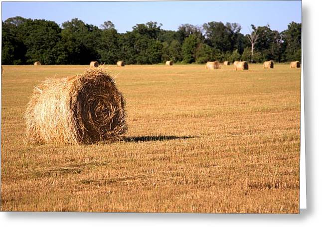 Greeting Card featuring the photograph Harvest Time by Gordon Elwell