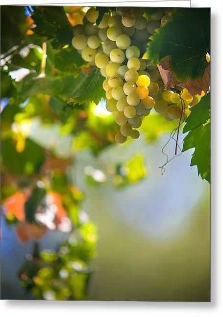 Harvest Time. Sunny Grapes V Greeting Card by Jenny Rainbow