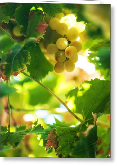 Harvest Time. Sunny Grapes Vii Greeting Card by Jenny Rainbow