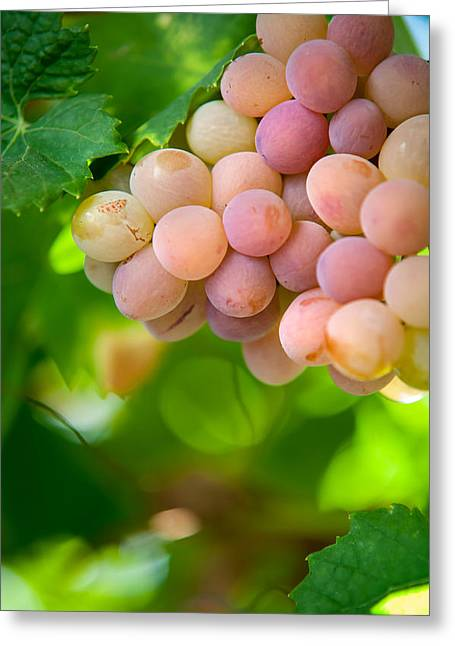 Harvest Time. Sunny Grapes Viii Greeting Card by Jenny Rainbow