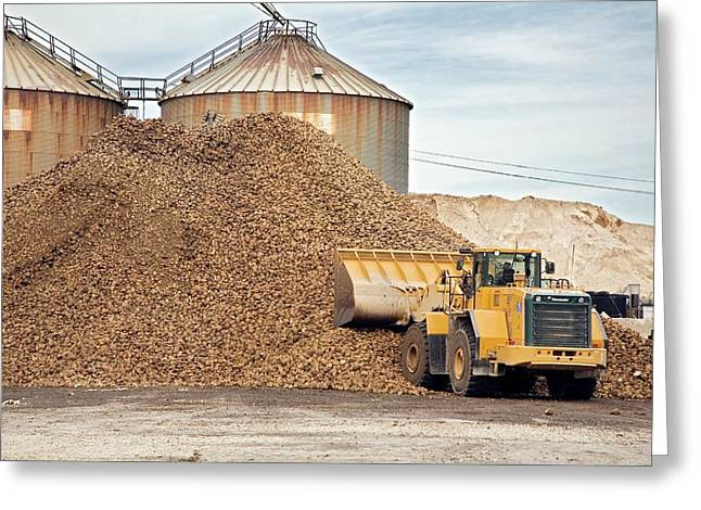 Harvested Sugar Beets Greeting Card by Jim West
