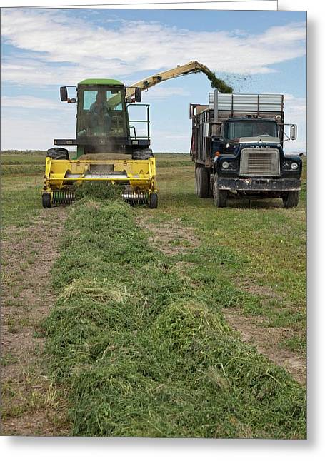Harvesting Alfalfa Crop Greeting Card