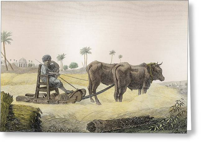 Harvesting Corn, From Volume II Arts Greeting Card by Nicolas Jacques Conte