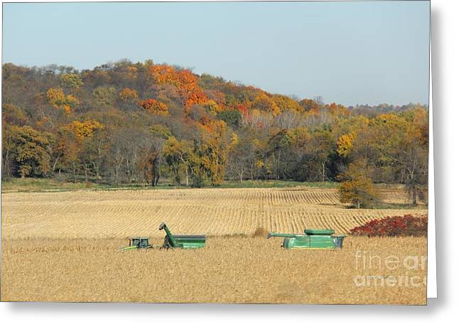 Harvesting Iowa Corn  Greeting Card