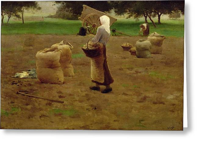 Harvesting Potatoes Oil On Canvas Greeting Card by Henri Lerolle