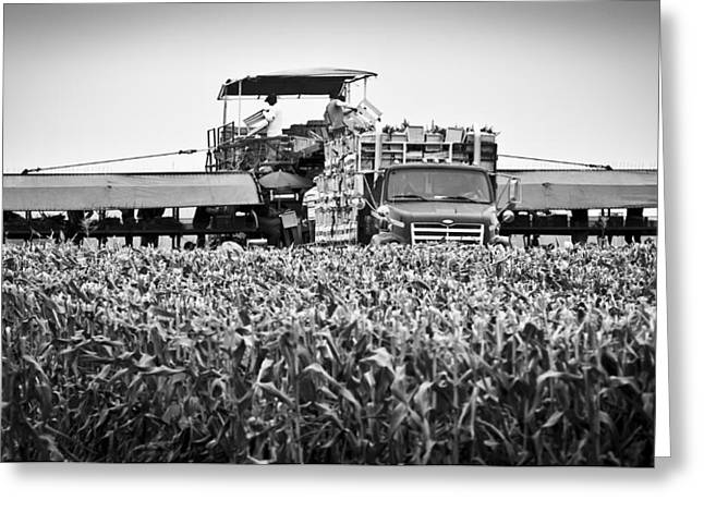 Greeting Card featuring the photograph Harvesting Time by Ricky L Jones